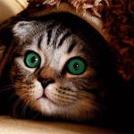 Katzenfutter Test – Das beste Futter für Ihre Katze