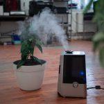 Luftbefeuchter Test – die besten Geräte im Vergleich